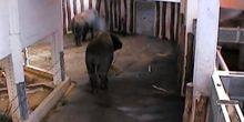 Webcam Tallinn - African Elephants - webcam 6