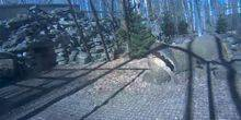 Webcam Tallinn - Amur leopard stump