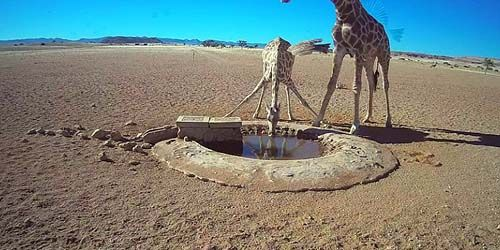 Webcam Windhoek - Wild animals at a watering hole
