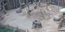 Webcam Amersfoort - Elephants at the zoo