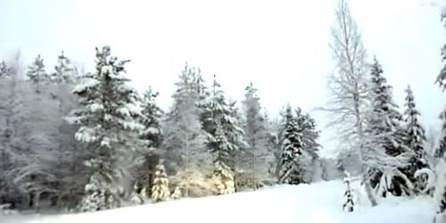 Webcam Rovaniemi - Lapland forest panorama
