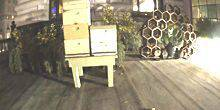 Webcam San Francisco - Beehives near the Fairmont Hotel