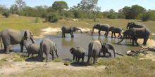 Elephants at a watering place in the Kruger National Park Hoedspruit