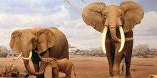 Webcam Laikipia - Wildlife in Africa Laikipia (Elephants)