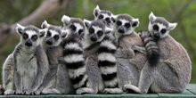 Webcam Yaroslavl - Lemurs and porcupines in the zoo