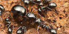 Webcam Moscow - Ant under the microscope