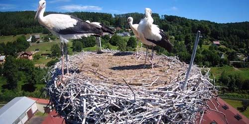 Webcam Trutnov - Storks nest