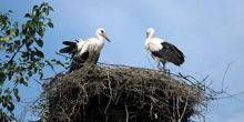 Webcam Ivano-Frankivsk - The Stork's Nest
