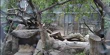 Webcam San Diego - Pandas at the San Diego Zoo
