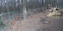 Webcam Ivano-Frankivsk - Galitsky National Nature Park