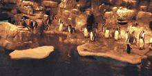 Webcam Houston - The penguins at Moody Gardens