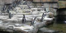 Webcam Milwaukee - Penguins on the rocks