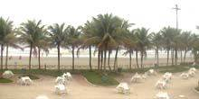 Webcam Sao Paulo - Cafe on the beach of Santos