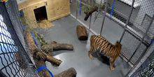 Webcam Topeka - Cage with tigers