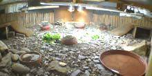 Webcam Sheffield - Terrarium with turtles