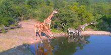 Webcam Nairobi - Wild animals at the watering place