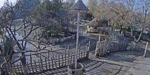 Webcam Budapest - Zoo - wild animals